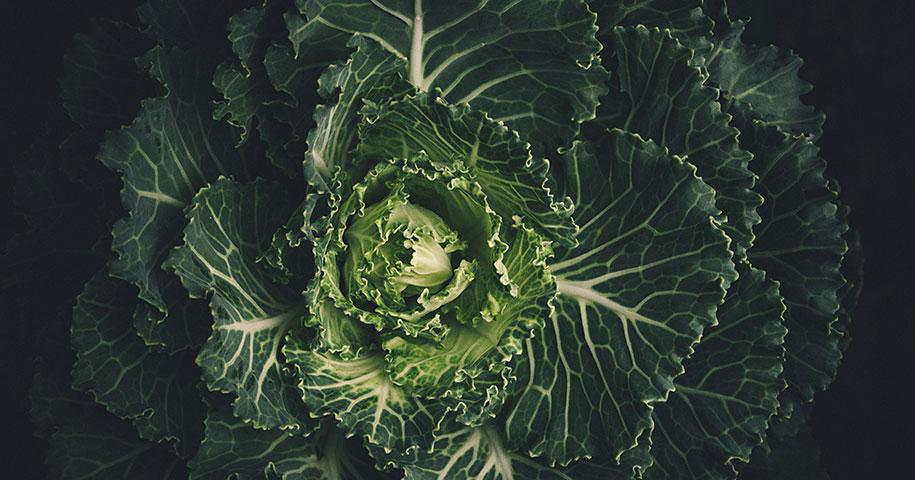 23 namirnice i biljke koje će vam pomoći za proljetni detoks