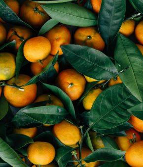 Mandarine domaće